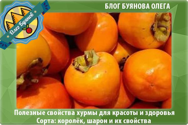 оранжевая хурма