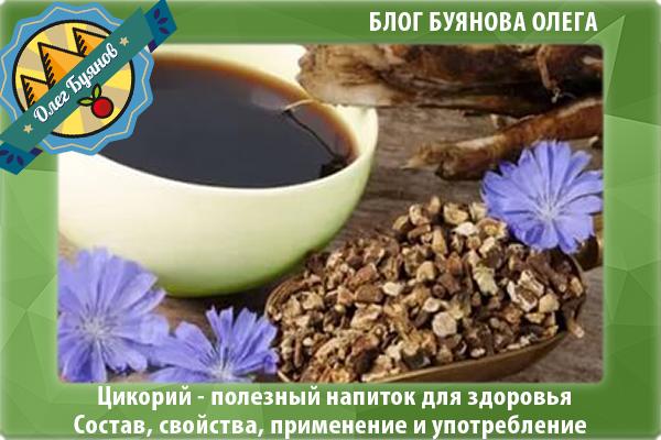 чашка цикория