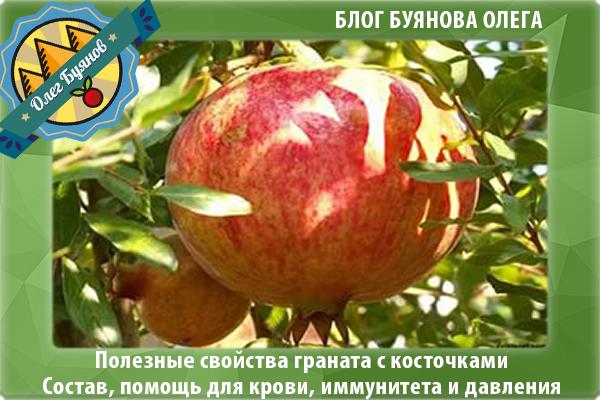 гранатовый фрукт