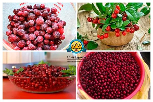 красные ягоды растения