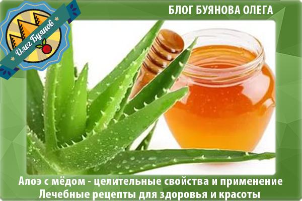 Настойка алоэ с мёдом и водкой – рецепты, применение и противопоказания