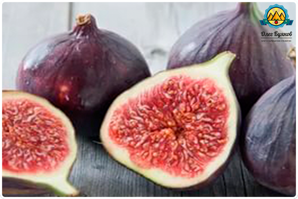 свежий инжирный плод