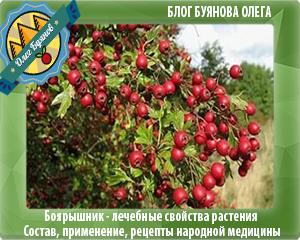 ягодки боярки красные