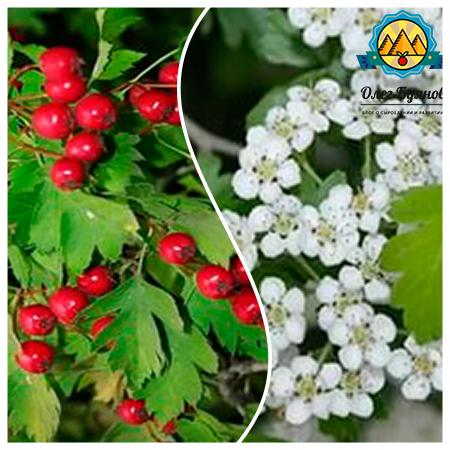красивые красные ягоды