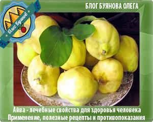 плод айвы