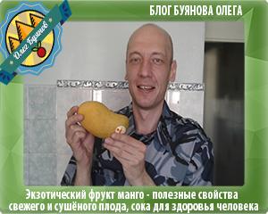 манго плод в руках