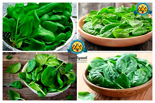 тарелка с листьями шпината