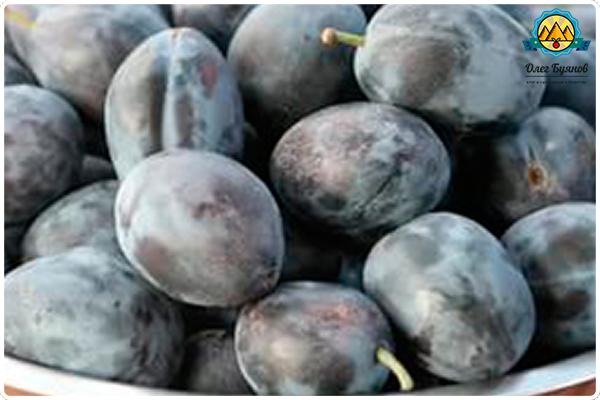 большой сливовый плод