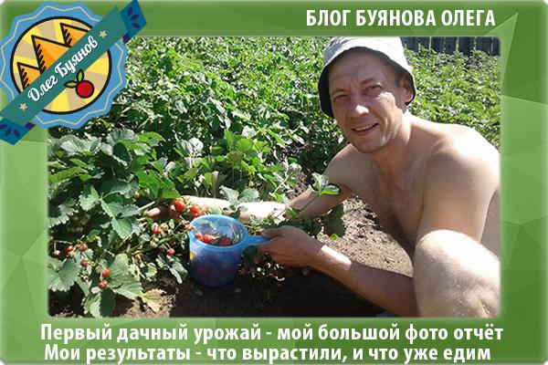 буианов олег собирает клубнику
