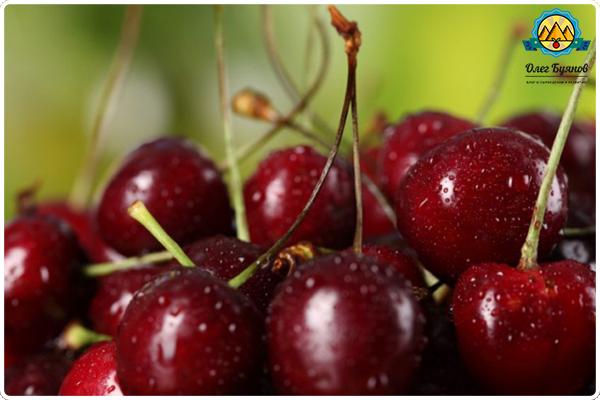вишнёвые плоды