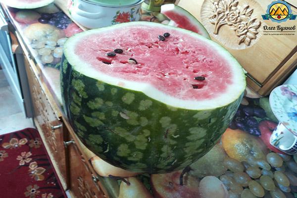 плод большой ягоды