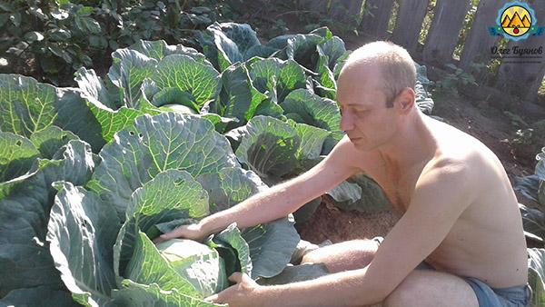 Буянов олег с капустой