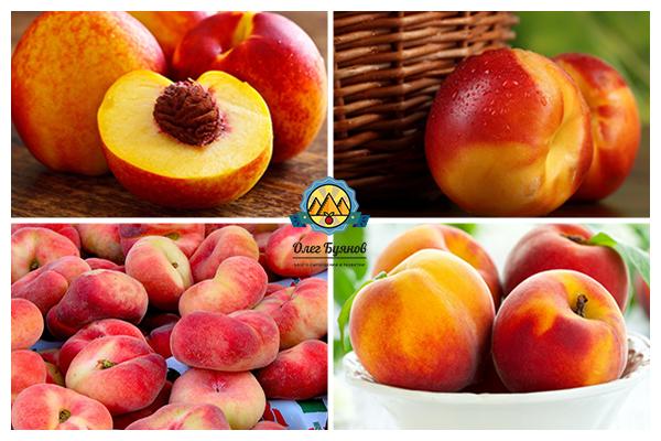 вкусный фрукт персика