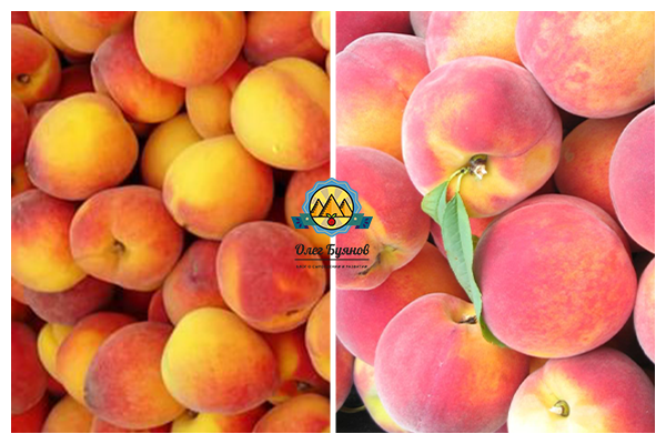 плоские и парагвайские персики