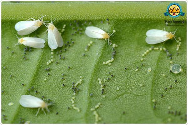 чистка от глистов и паразитов