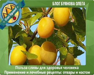 фрукты сливы