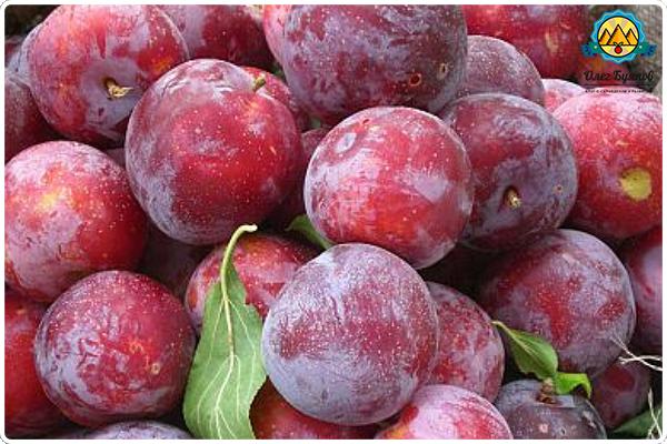 фруктовые плоды