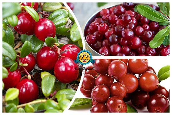 лечебные плоды