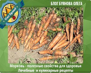 морковка на даче