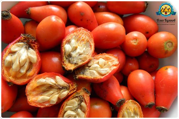 нарезанные плоды шиповника