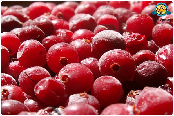 замороженная ягода клюква