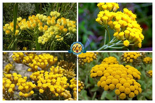 жёлтые цветки
