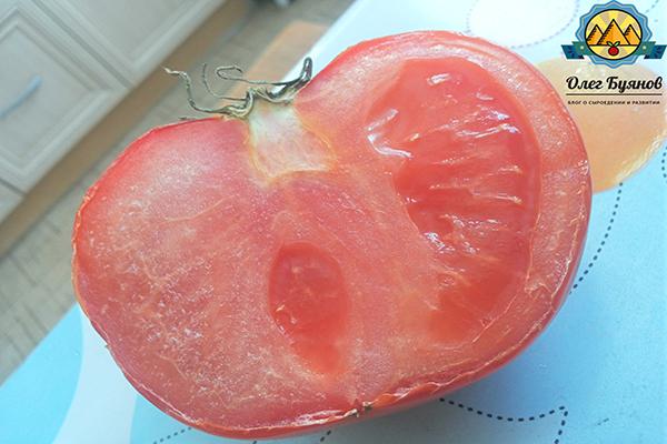 томат в разрезе