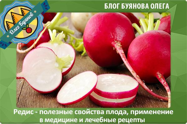 красный плод редиса