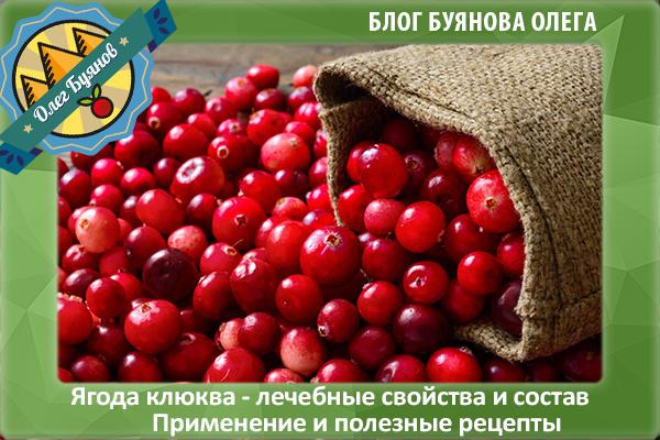 красные ягоды клюквы