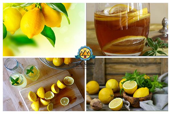 лимоны для лимонада
