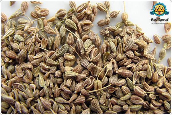 собранные семена аниса
