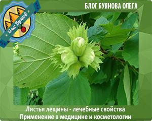 зелёная лещина