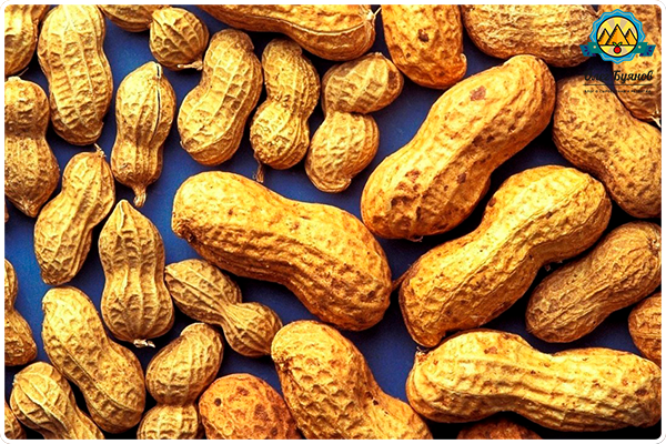 арахисовые бобы