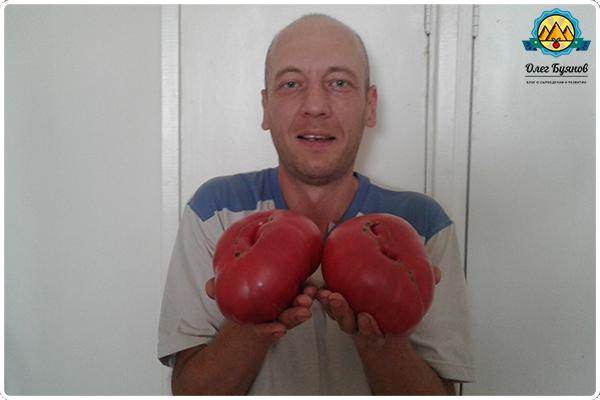 буянов олег с томатами