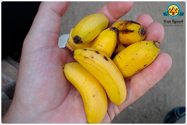 маленькие бананчики