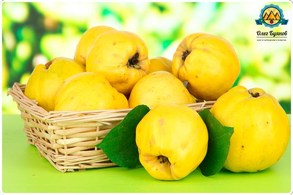 фрукты в лукошке