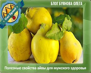 фрукты красивые