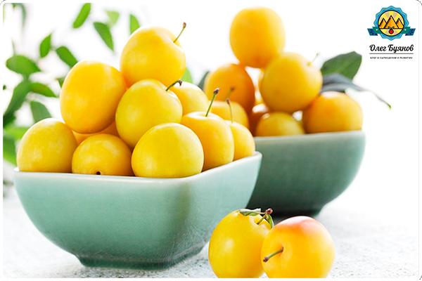 фрукт алыча