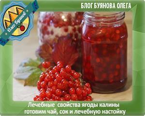 калиновые ягодки
